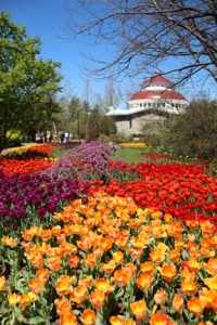 Cincinnati BotGar Tulips