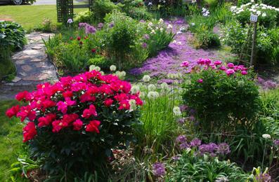 Ken Brown's front garden (2).JPG