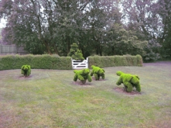 Speight Topiaries