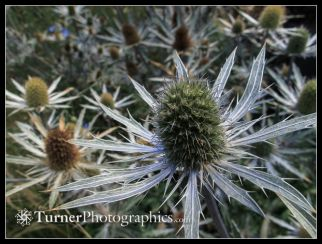 Turner_1304839.jpg