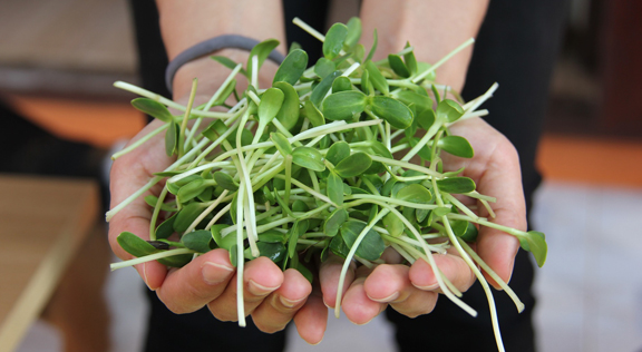 handful-of-sprouts