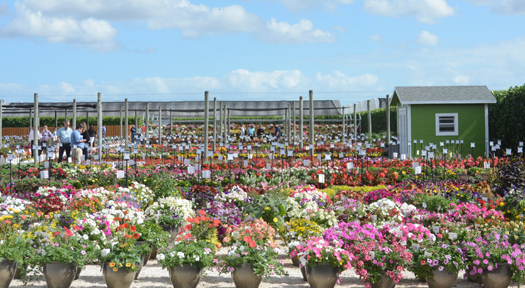 Clarke Costa Farms Trial Gdn.jpg