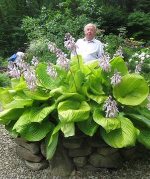 Buffalo Jentz Shadrack Hosta.jpg