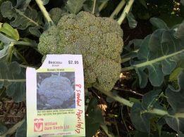 Broccoli_preview.jpg